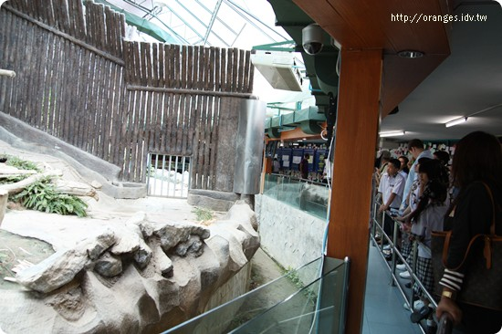 清邁動物園